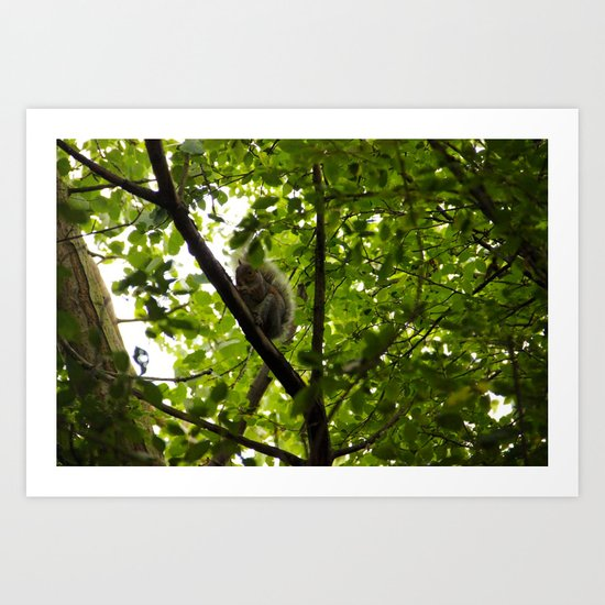 Peek a boo Squirrel Art Print