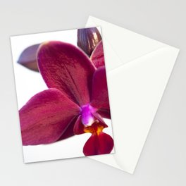 Orchid Flowers 01 Stationery Cards