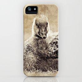 Vintage Greylag Goose iPhone Case