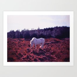 The Bloodhorse Graze by Úna Blue Art Print