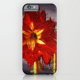 Amaryllis Blossom Flowers iPhone Case