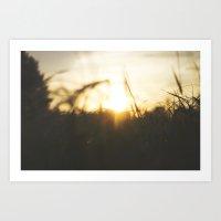 Sun Through the Tall Grass Art Print