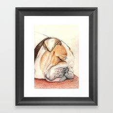 English bulldog Alfie Framed Art Print