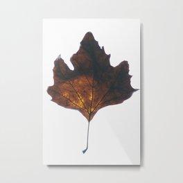 Illuminaire Metal Print