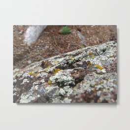 devils tower moss Metal Print