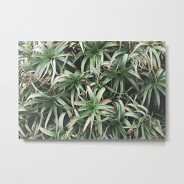 Aloe, mate. Metal Print