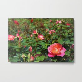 Shot a Flower Metal Print