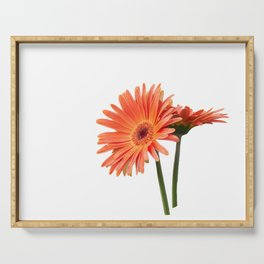 isolated gerbera daisy in the vase Serving Tray