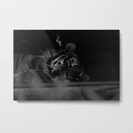 Just lazing about Metal Print