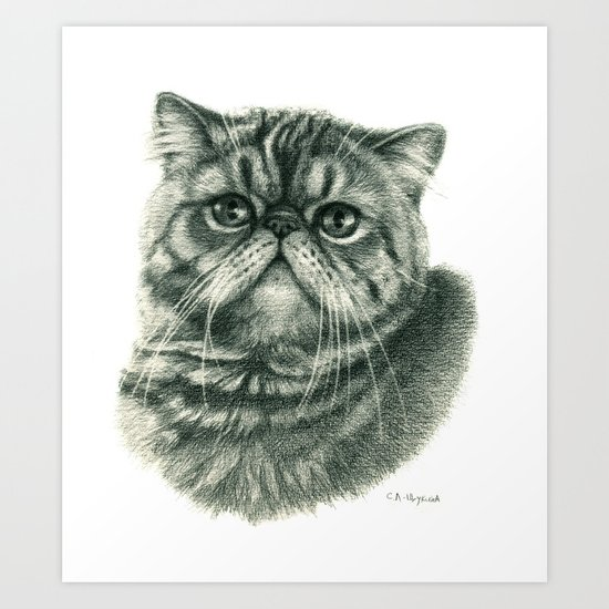 Shorthair Persan cat G088 Art Print