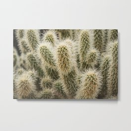 Cholla Cactus Metal Print