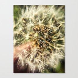 Dandelion Bliss Canvas Print