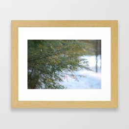 hemlock in a golden winter Framed Art Print