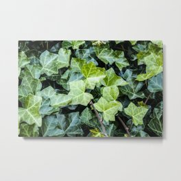 Green Ivy Photography Print Metal Print