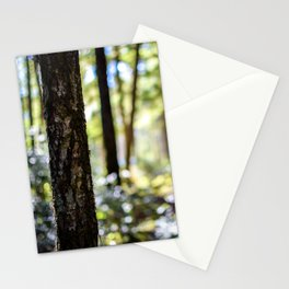 Dappled Sunlight Stationery Cards