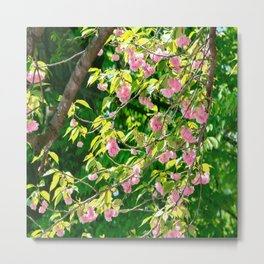 Sweeping Cherry Blossom Branches Metal Print
