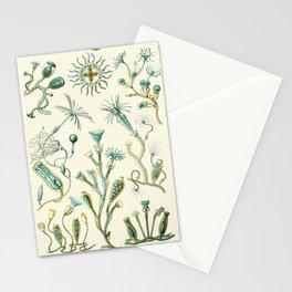 Ernst Haeckel - Scientific Illustration - Campanariae Stationery Cards