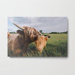 Highland Cows II Metal Print