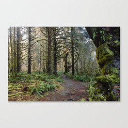 Rainforest Adventure II Canvas Print