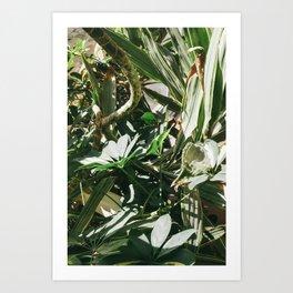 Tree Branch Art Print