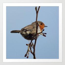 Beautiful robin Art Print