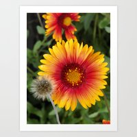 Floral Splendor Art Print