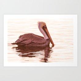 Bird - Brown Pelican - Study 8 Art Print
