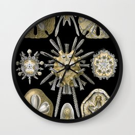 Sand Dollar Beach Print Wall Clock