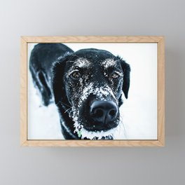 Snow Dog // Cross Country Skiing Black and White Animal Photography Winter Puppy Ice Fur Framed Mini Art Print