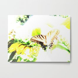 Faded Butterfly Metal Print