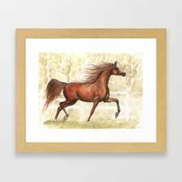 chestnut arabian horse Framed Art Print
