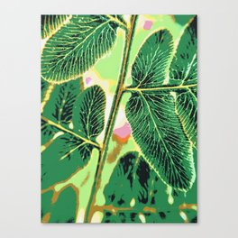 party fern Canvas Print