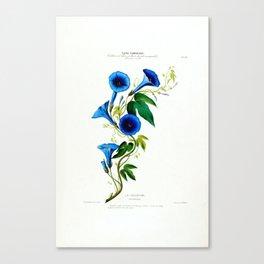 La Celestine Vintage Botanical Flore D Amerique Canvas Print