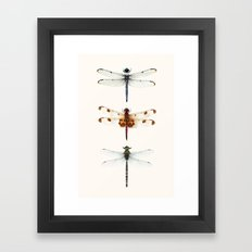 Dragonfly Collector Framed Art Print
