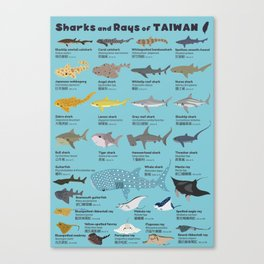 Sharks and Rays of Taiwan Canvas Print