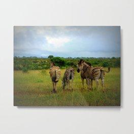 African Zebras on the Serengeti Metal Print