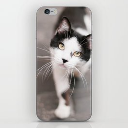 Friendly Black and White Cat iPhone Skin