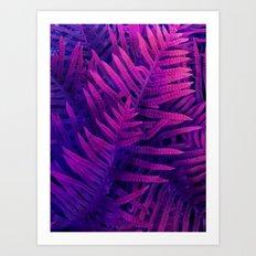 Ferns#2 Art Print