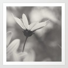 Graceful in Monochrome Art Print