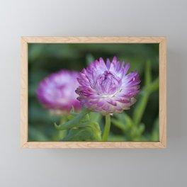 Straw Flower Framed Mini Art Print
