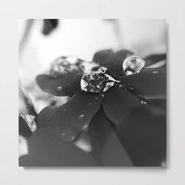 - 032. Metal Print