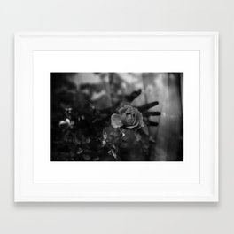 whispers iii Framed Art Print