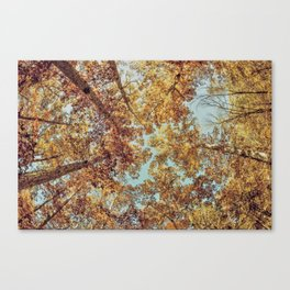Tree bunches Canvas Print