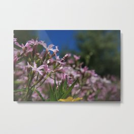 Small Flowers 2 Metal Print