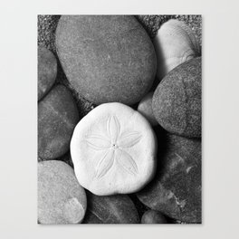 Sand Dollar on Rocks Canvas Print