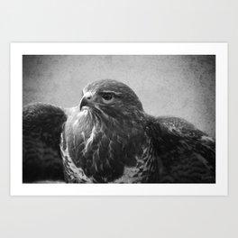 Common Buzzard II BW Art Print