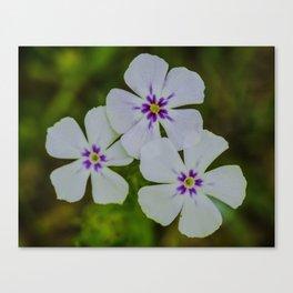 Wild White Flower Canvas Print