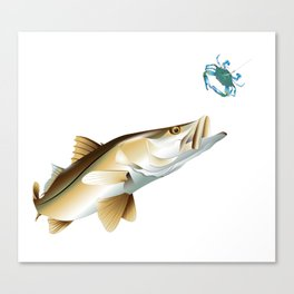 Snook Chasing a Blue Crab Canvas Print