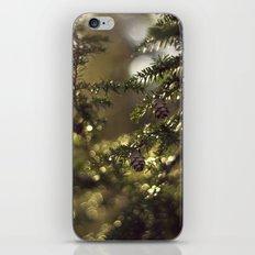 Pine Tree iPhone & iPod Skin