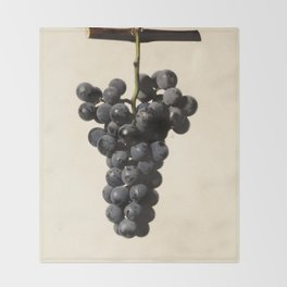 Vintage Concord Grapes Illustration Throw Blanket